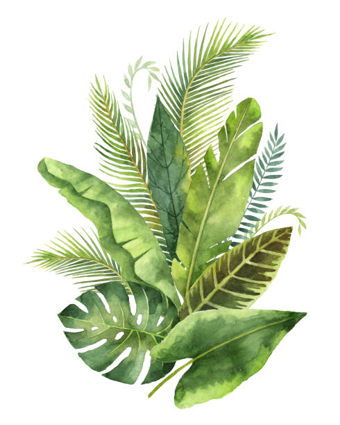 Watercolor bouquet tropical leaves and branches isolated on white background. Watercolor bouquet tropical leaves and branches isolated on white background. Illustration for design wedding invitations, greeting cards, postcards with space for your text. tropical flower stock illustrations