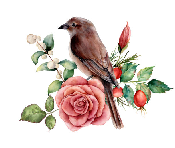 ilustrações de stock, clip art, desenhos animados e ícones de watercolor bouquet with bird and rose. hand painted floral illustration with pink flower, dogrose, snowberries, leaves and branches isolated on white background. for design, print or background. - home decor boho