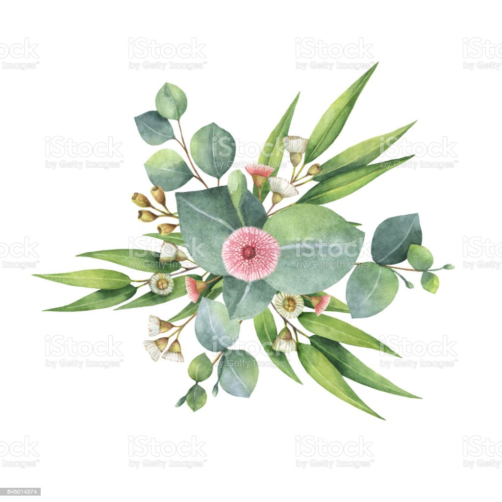 Watercolor bouquet with green eucalyptus leaves and branches. vector art illustration