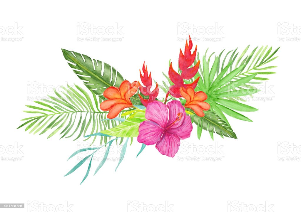 Watercolor Bouquet With Tropical Flowers Stock Vector Art More