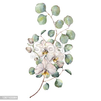 Watercolor bouquet with white orchids and silver dollar eucalyptus leaves. Hand painted tropical card with flowers isolated on white background. Floral illustration for design, print, background