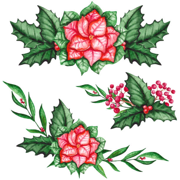 17aa3ed97 Watercolor Bouquets with Poinsettia and Red Berries vector art illustration