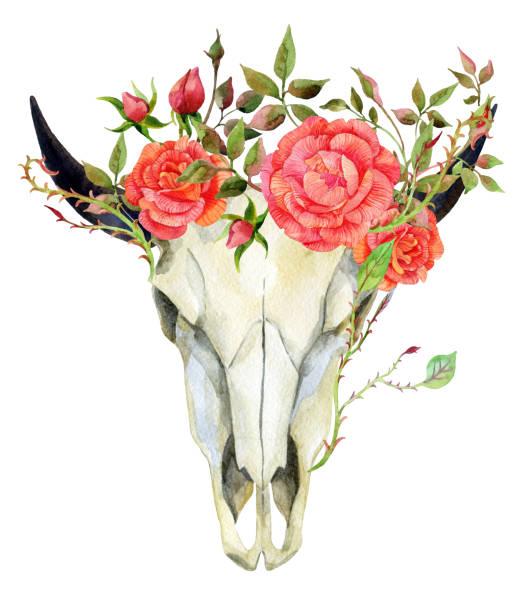 watercolor buffalo skull - animal skull stock illustrations
