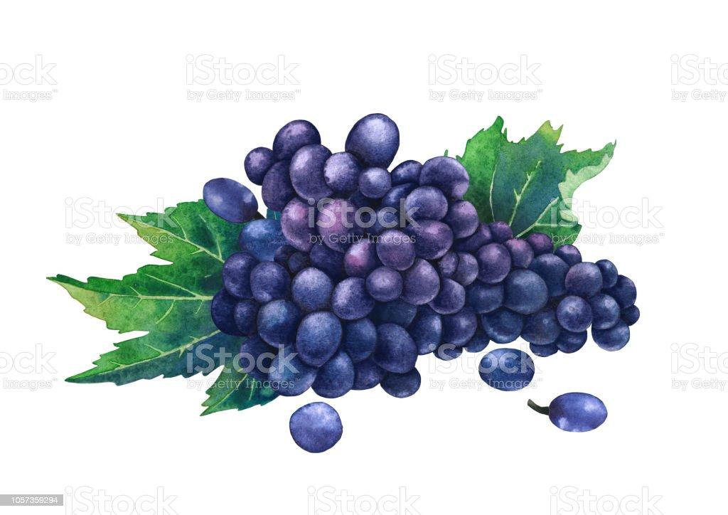 Sulu Boya Ile Dekore Edilmiş Mavi üzüm Demet Yaprak Stok Vektör
