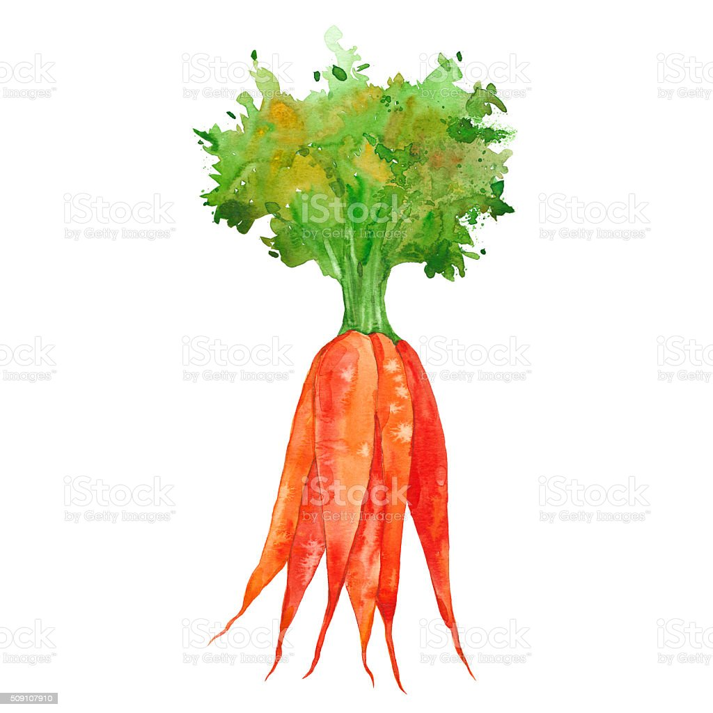 watercolor bunch of carrots vector art illustration