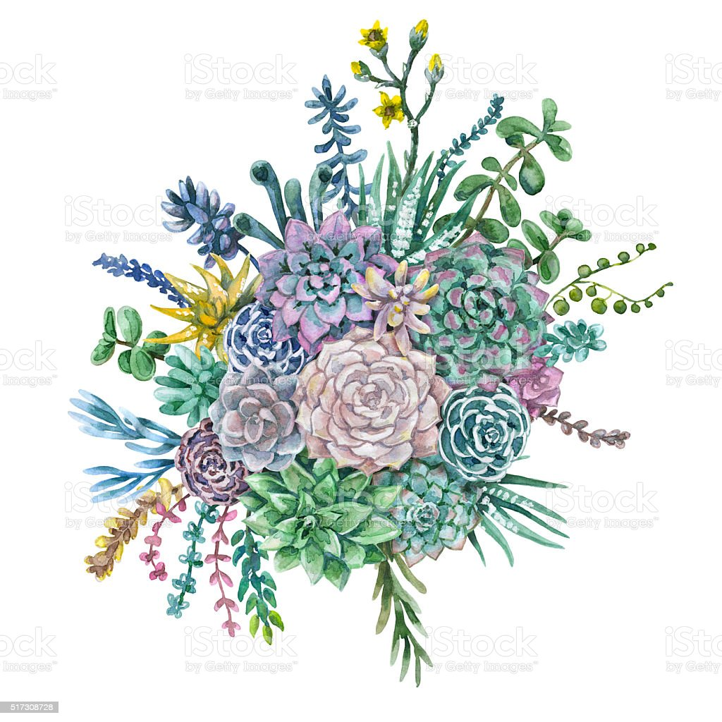 Watercolor Bunch Of Succulents Stock Vector Art 517308728