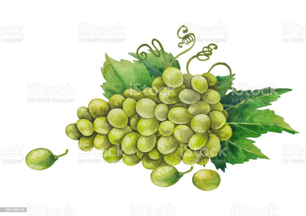 Sulu Boya Beyaz üzüm Demet Yeşil Yaprakları Ile Dekore Edilmiştir