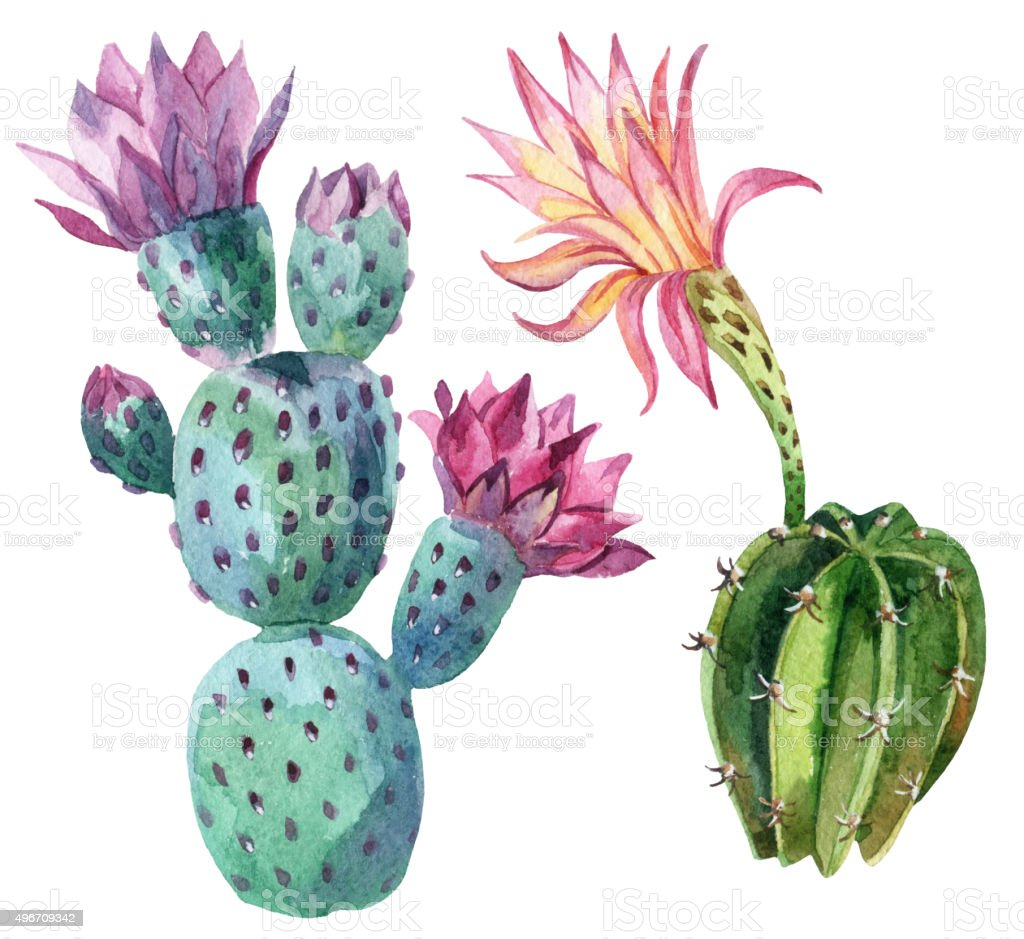 Watercolor cactus vector art illustration