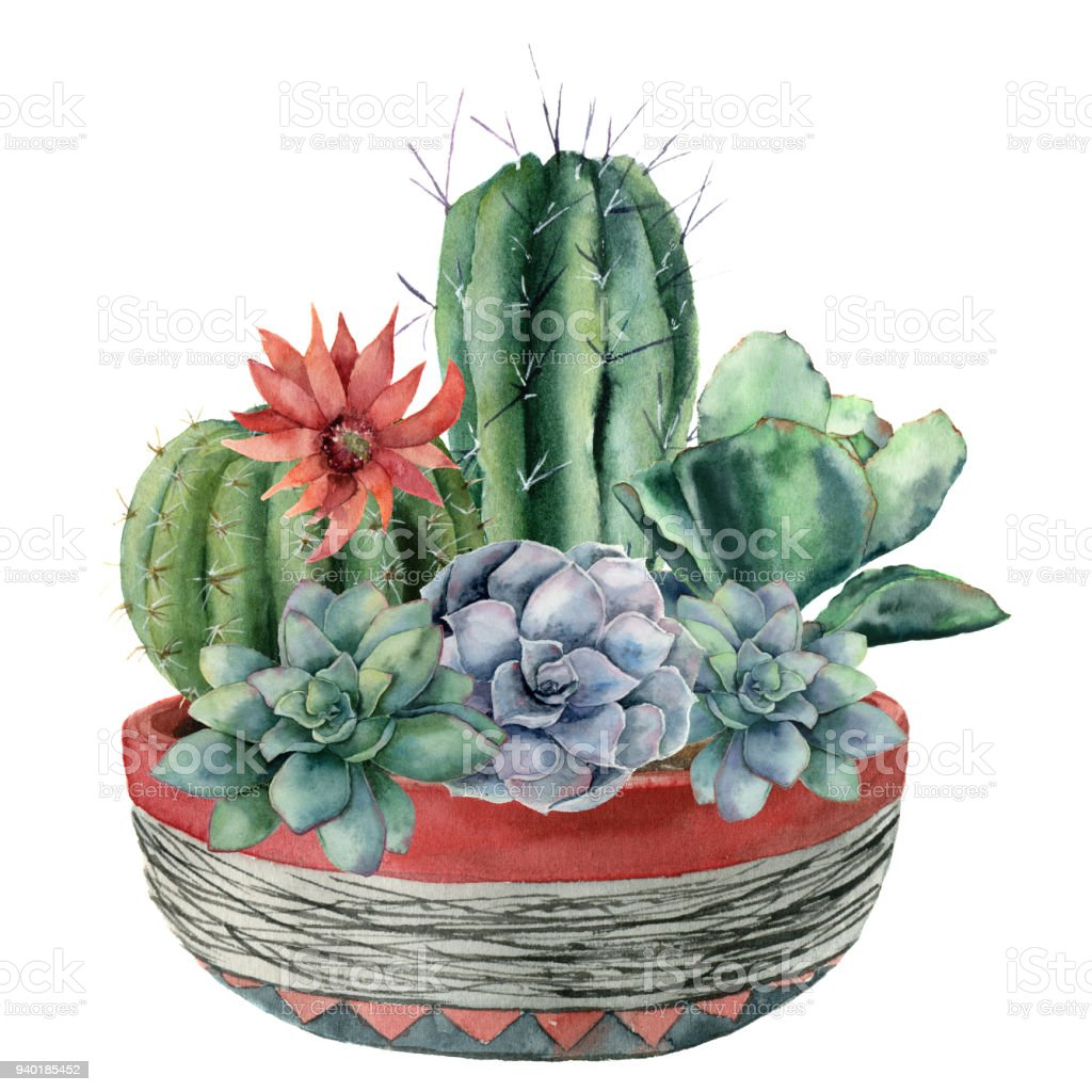 Watercolor Cactus With Succulent In A Pot Hand Painted Cereus