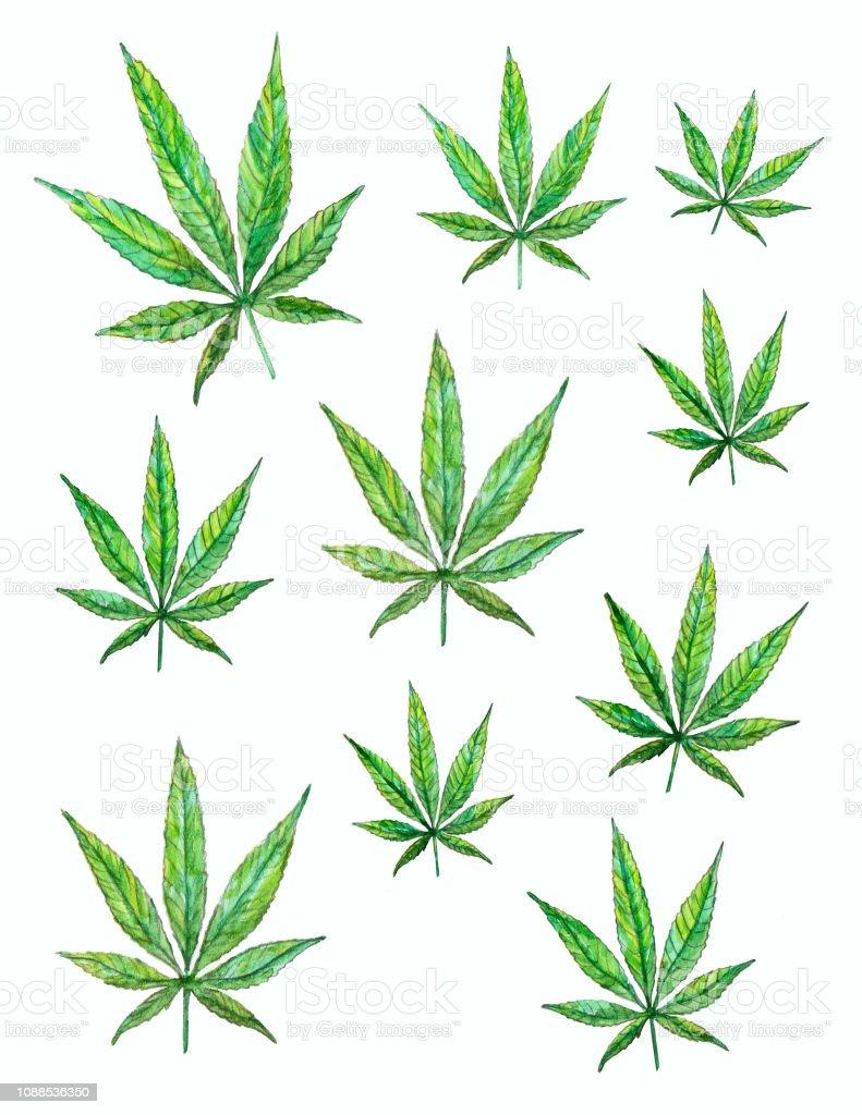 Watercolor Cannabis Leaves vector art illustration