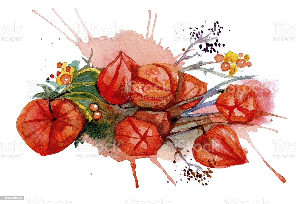 Watercolor cabo de gooseberry y flujo - ilustración de arte vectorial