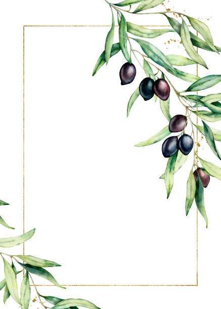 illustrazioni stock, clip art, cartoni animati e icone di tendenza di watercolor card with olive tree branch and golden frame. hand painted floral illustration isolated on white background. botanical greeting template for design. - verde cachi