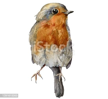istock Watercolor card with robin redbreast. Hand painted bird isolated on white background. Wildlife illustration for design, print, fabric or background. 1291610053