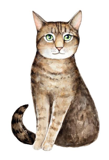 illustrazioni stock, clip art, cartoni animati e icone di tendenza di watercolor cat portrait. - ocicat