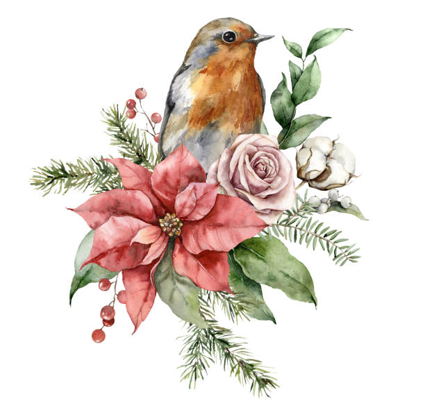 ilustrações de stock, clip art, desenhos animados e ícones de watercolor christmas bouquet with robin redbreast, poinsettia, roses and fir branches. hand painted holiday card with flowers isolated on white background. illustration for design, print, background. - pena de pássaro algodão
