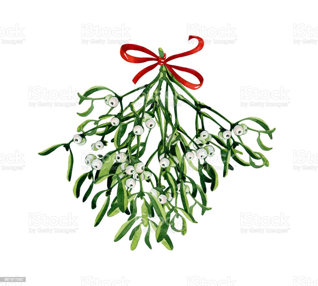 Watercolor Christmas branch of mistletoe. vector art illustration