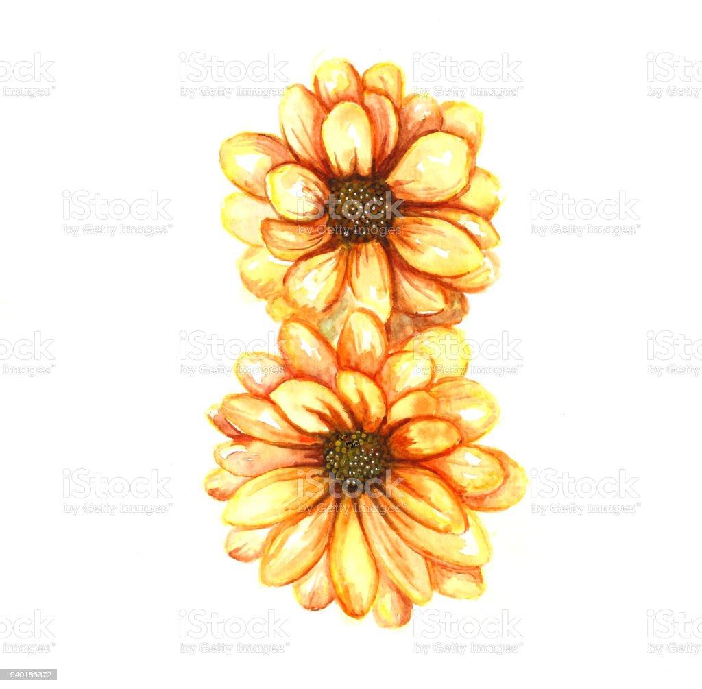 Suluboya Krizantem çiçek Boyama Stok Vektör Sanatı 8 Rakamınin