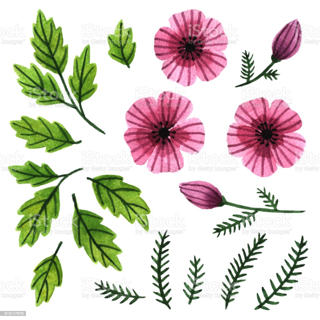 Watercolor clip art collection of pink tropical flowers and green watercolor clip art collection of pink tropical flowers and green leaves hand painted floral elements mightylinksfo Images