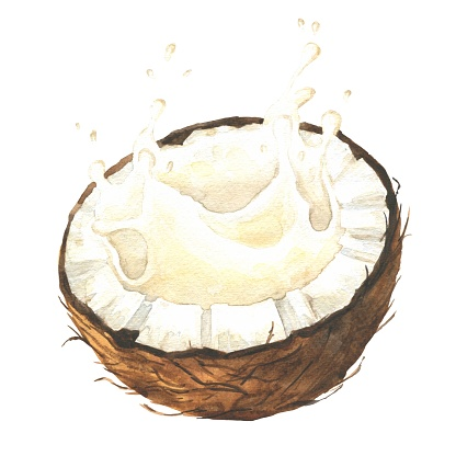 Watercolor coconut milk splash isolated on white background. Hand drawn food illustration.