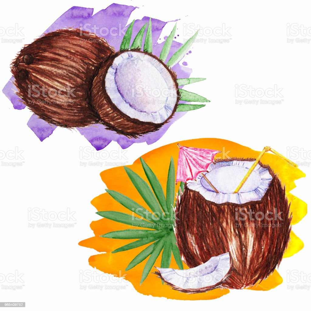 Coco em aquarela com canudo. - Ilustração de Abacate royalty-free
