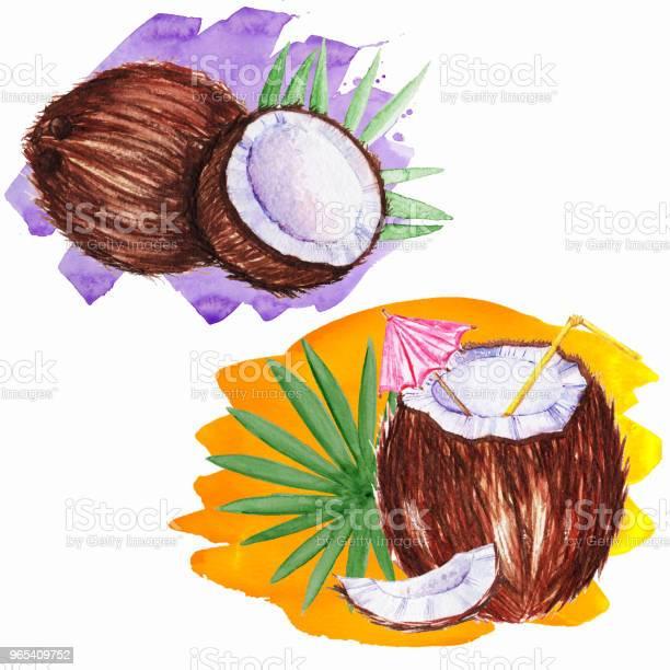 Vetores de Coco Em Aquarela Com Canudo e mais imagens de Abacate