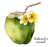 istock Watercolor coconut with plumeria flowers. Hand painted exotic drink with striped tube and floral decor isolated on white background. Tropical cocktail with a straw. Food illustration for design 905682808