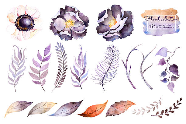 watercolor collection watercolor collection with flower,leaves,branche,feather.Hand painted collection with 18watercolor elements.Set of floral elements for your composition.Can be used for wedding invitation trillium stock illustrations