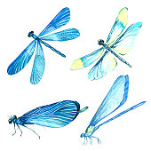 Watercolor collection of blue dragonfly illustrations. Isolated image of an insect on a white background. Hand-painted painting of an animal.