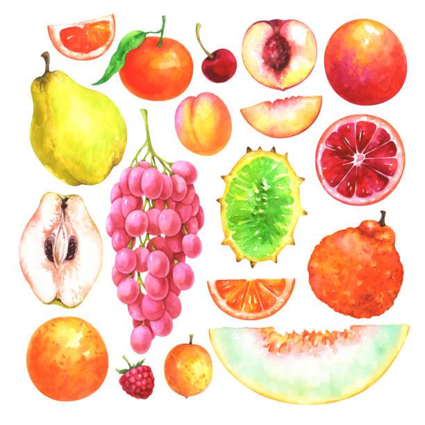 Ugli Fruit Drawing Clip Art Vector Images Illustrations