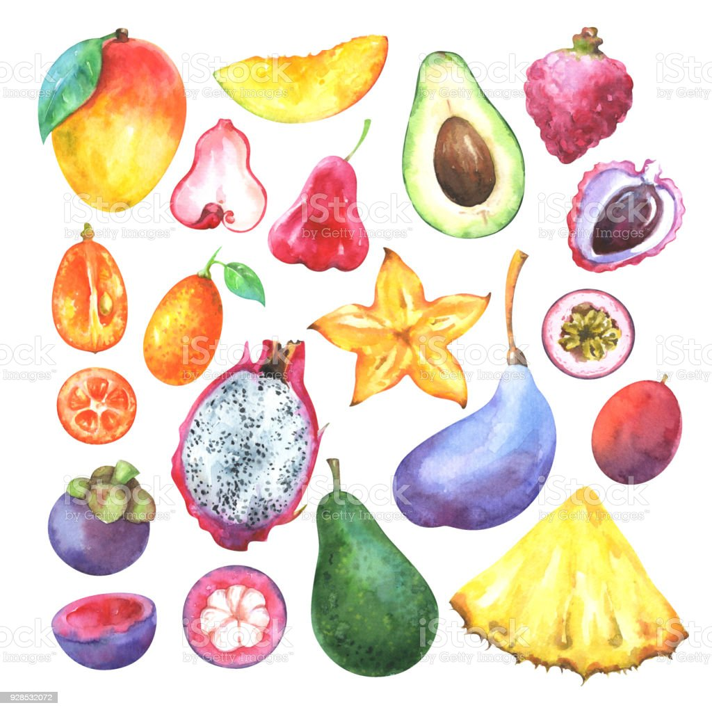 Watercolor collection of mango, pineapple, carambola, avocado, pitaya, lychee, passiflora edulis, kumquat, mangosteen, akebia quinata  isolated on white background vector art illustration