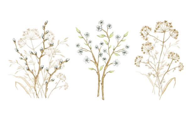 kolekcja akwareli z bukietem zielnika - gałąź część rośliny stock illustrations