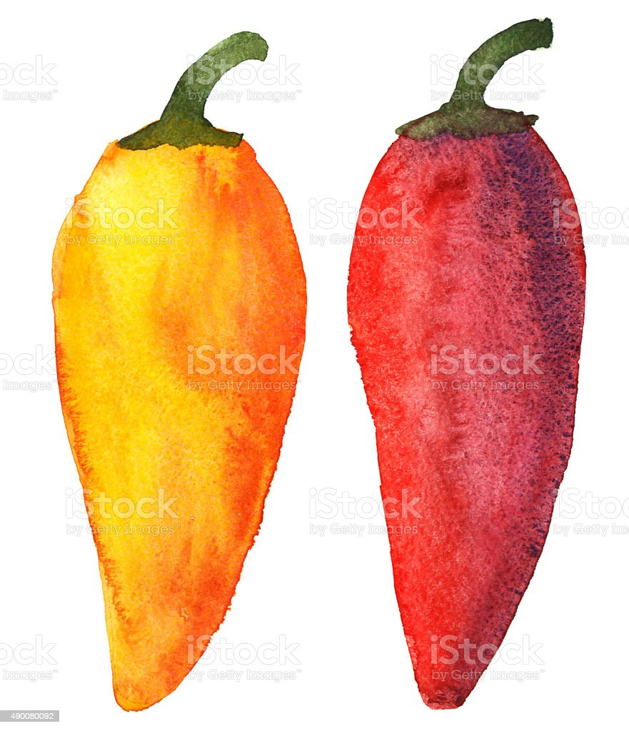 Watercolor colorful peppers set vector art illustration