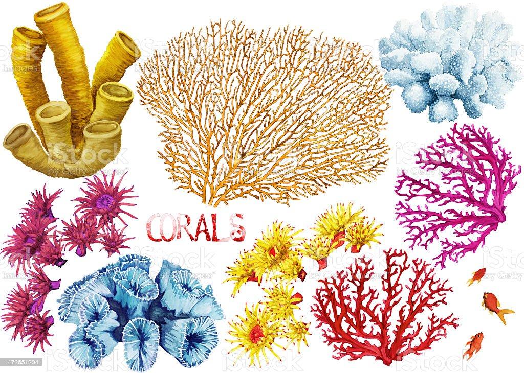 Watercolor corals set vector art illustration