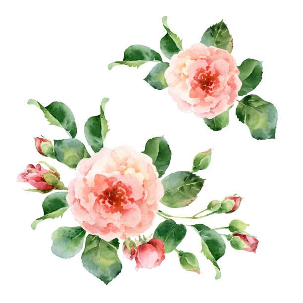 illustrazioni stock, clip art, cartoni animati e icone di tendenza di watercolor corner floral frame of roses - mika