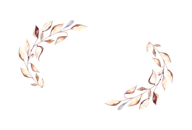 Watercolor cotton and dry leaves vector art illustration