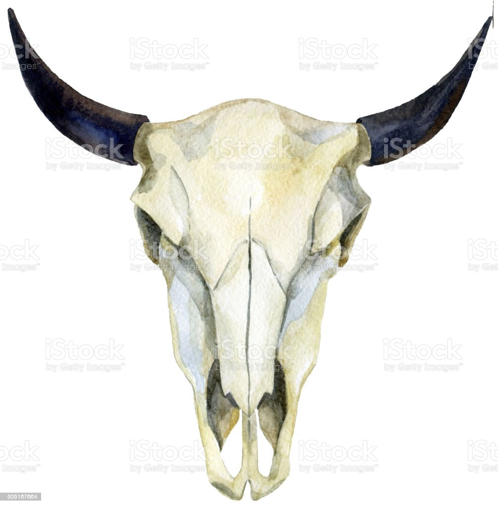 watercolor cow skull vector art illustration