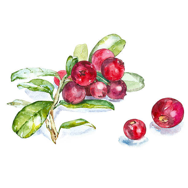 Cranberries Clipart