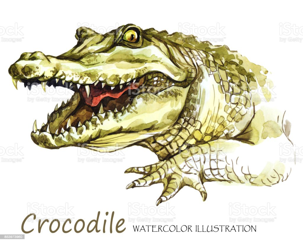 Watercolor Crocodile On The White Background African Animal Wildlife ...