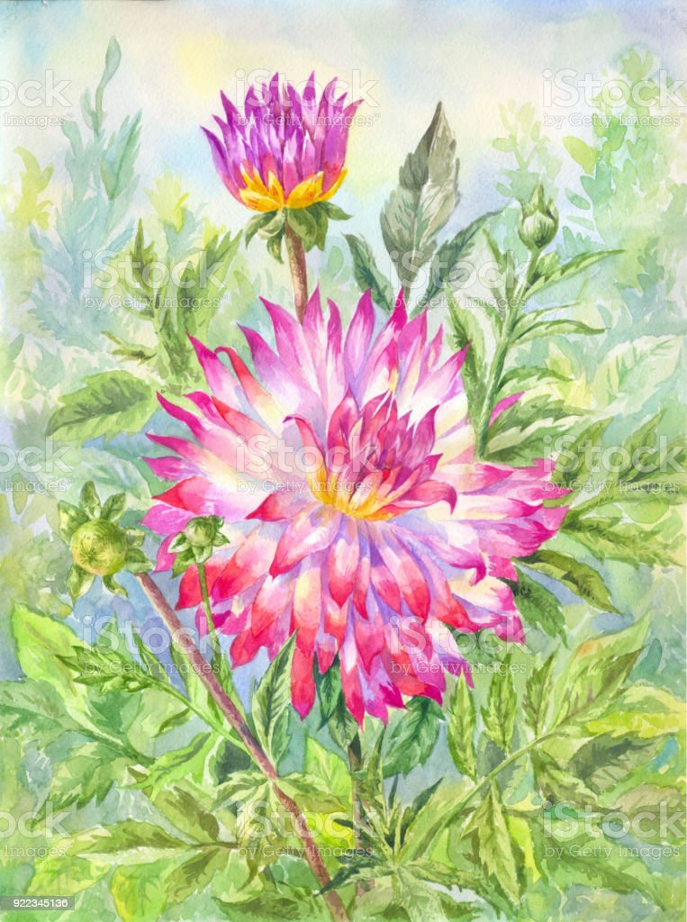dahlia aquarelle dans le jardin fleuri illustration de l t cliparts vectoriels et plus d. Black Bedroom Furniture Sets. Home Design Ideas