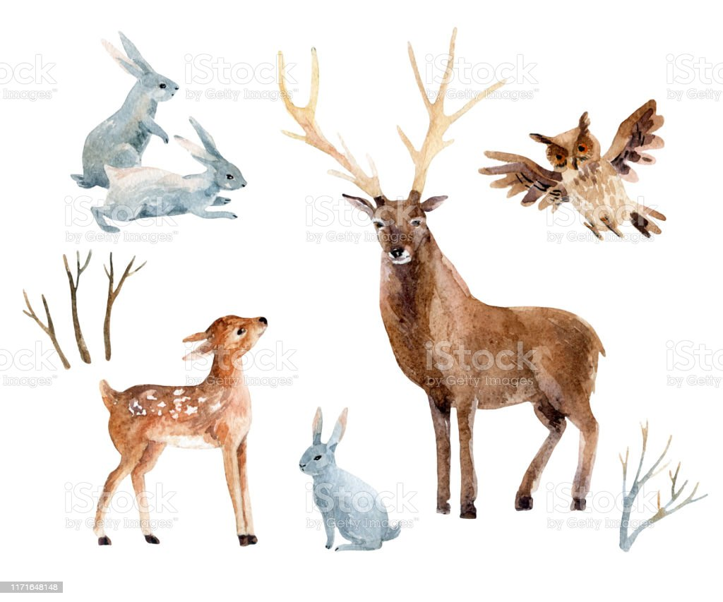 Watercolor Deer With Fawn Rabbits Birds Isolated On White ...