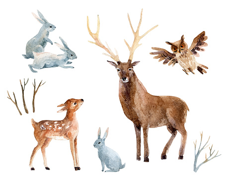 Watercolor deer with fawn, rabbits, birds isolated on white background.
