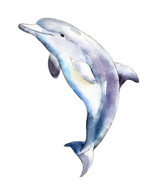 watercolor dolphin,  hand-drawn illustration isolated on white background. - dolphin stock illustrations