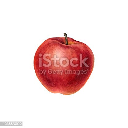 watercolor drawing red apple isolated at white background, hand drawn botanical illustration