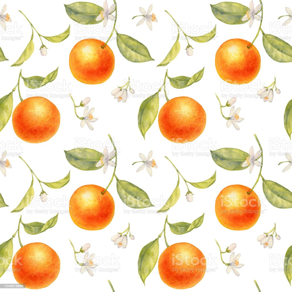 Watercolor Drawing Branch Of Orange Tree Stock Illustration Download Image Now Istock