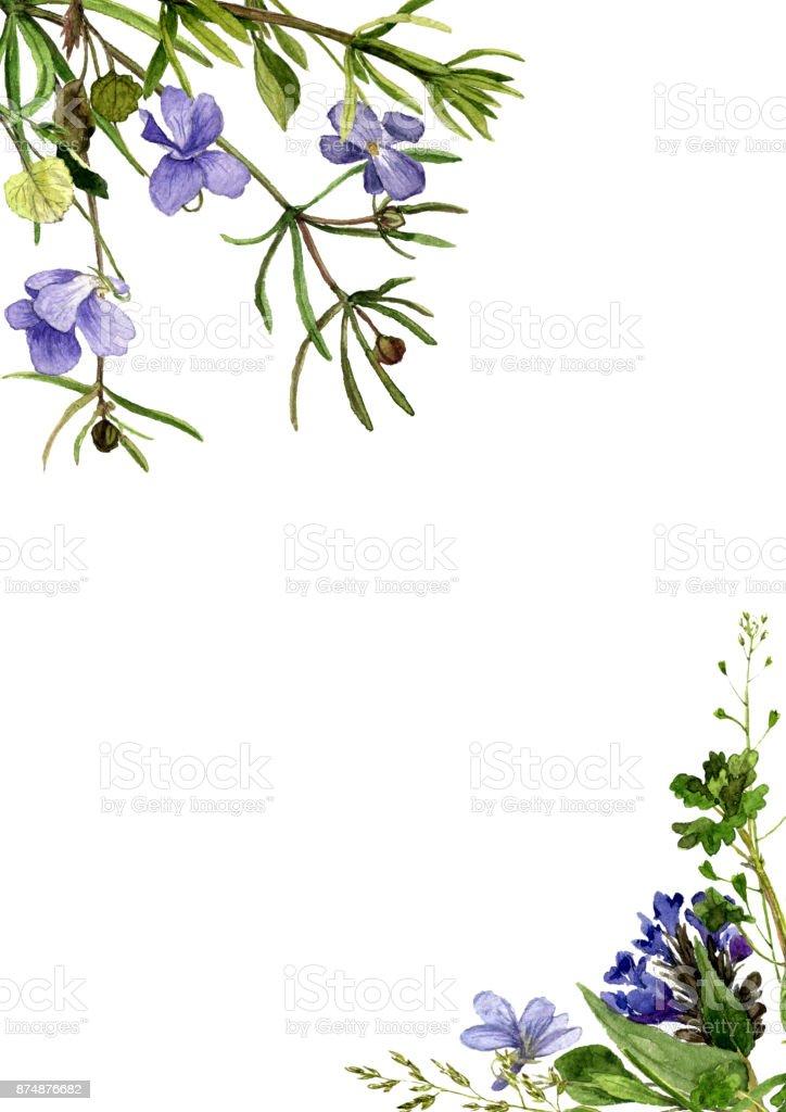 Plantes Et Fleurs Dessin Aquarelles Cliparts Vectoriels Et