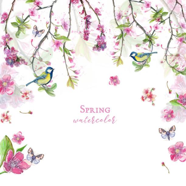 illustrazioni stock, clip art, cartoni animati e icone di tendenza di watercolor drawing of cherry cherry blossoms cherry blossoms, pink flowers, gentle tones, on the theme of spring, mother's day, march 8, birthday with birds, tits and oriol for decor and design of pos - farfalla ramo