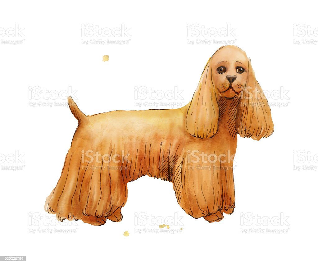 Top Spaniel Canine Adorable Dog - watercolor-drawing-of-cokcer-spaniel-brown-cute-dog-illustratio-illustration-id525226794  Snapshot_514433  .com/illustrations/watercolor-drawing-of-cokcer-spaniel-brown-cute-dog-illustratio-illustration-id525226794