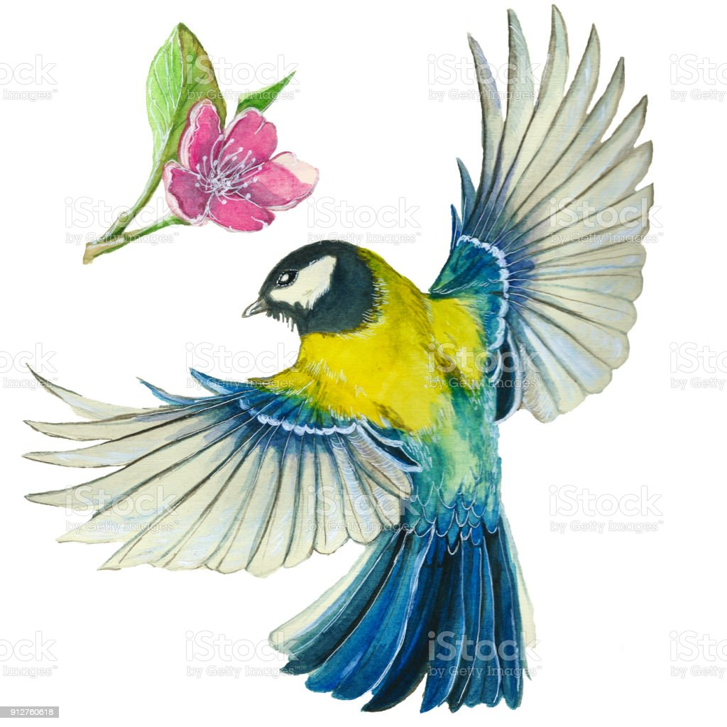 aquarelle dessin sur le th me du printemps la chaleur illustration dun oiseau de lordre des. Black Bedroom Furniture Sets. Home Design Ideas