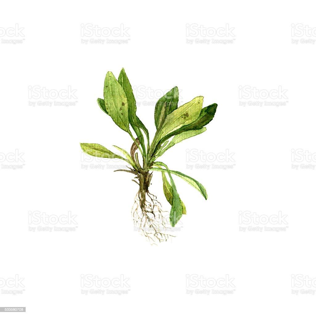 Aquarelle Dessin Avec Feuilles De Plantes Et De Racines