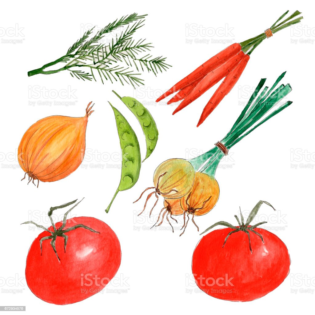 Watercolor drawn vegetables set with tomatoes, onions, parrots, rosemary and peas vector art illustration